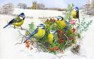 Blue Tits in a Hedgerow Nest