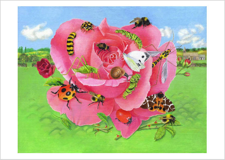 Rose With Insects Giclee Print Example